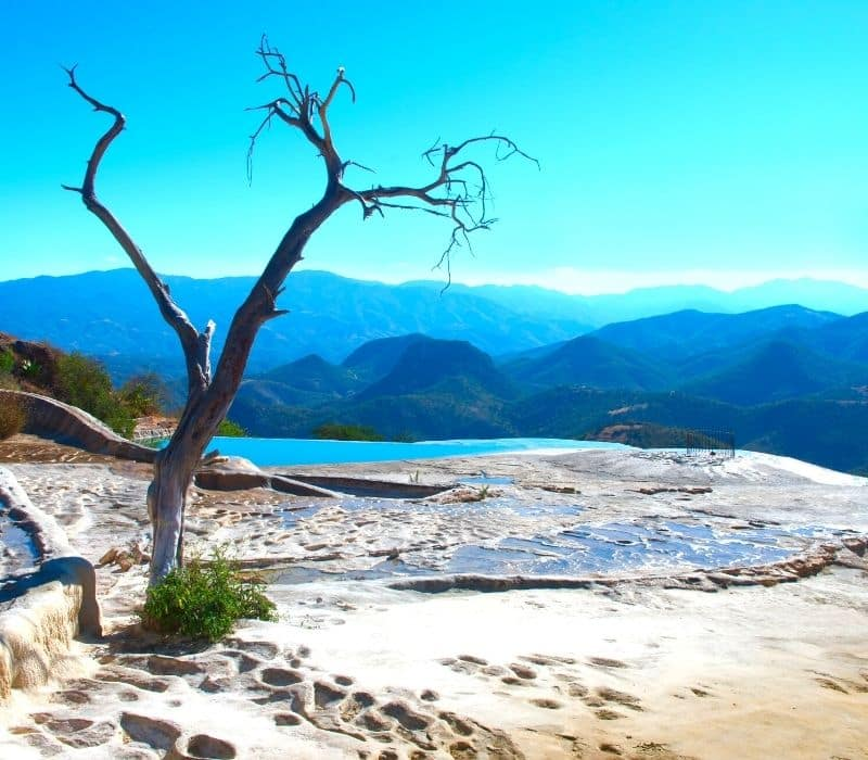 Tree and natural mineral pool on a mountain