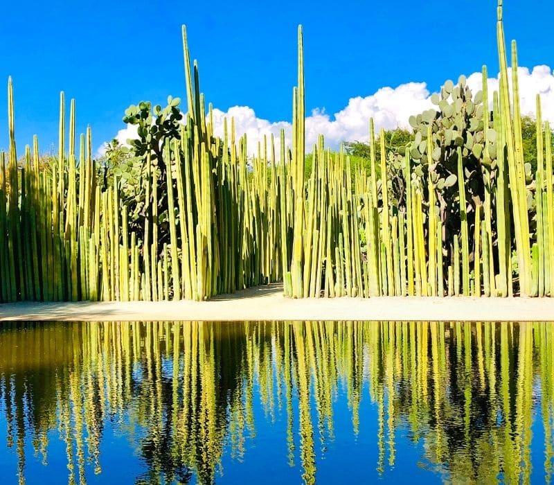 very tall cacti in oaxaca mexico - Traveling to Oaxaca