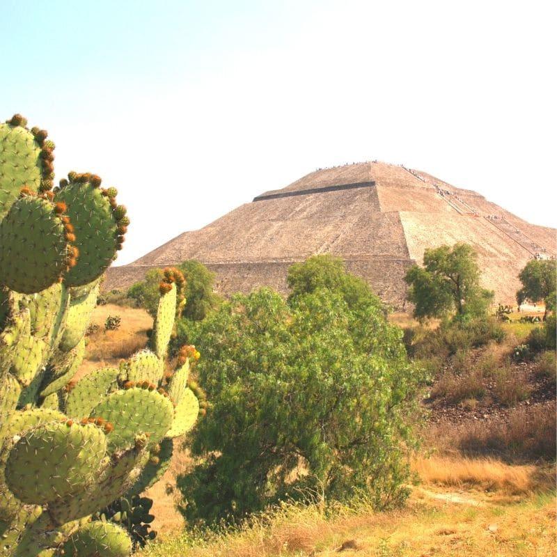 Aztec pyramid and some cacti | 4 day mexico city itinerary