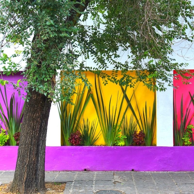 Colorful wall in Coyoacan