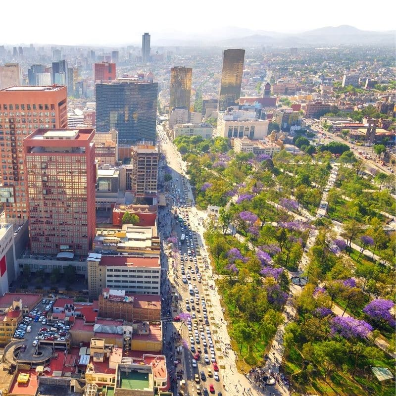 park with green space and purple flower trees next to large skyscrapers and buildings | Mexico City historic center