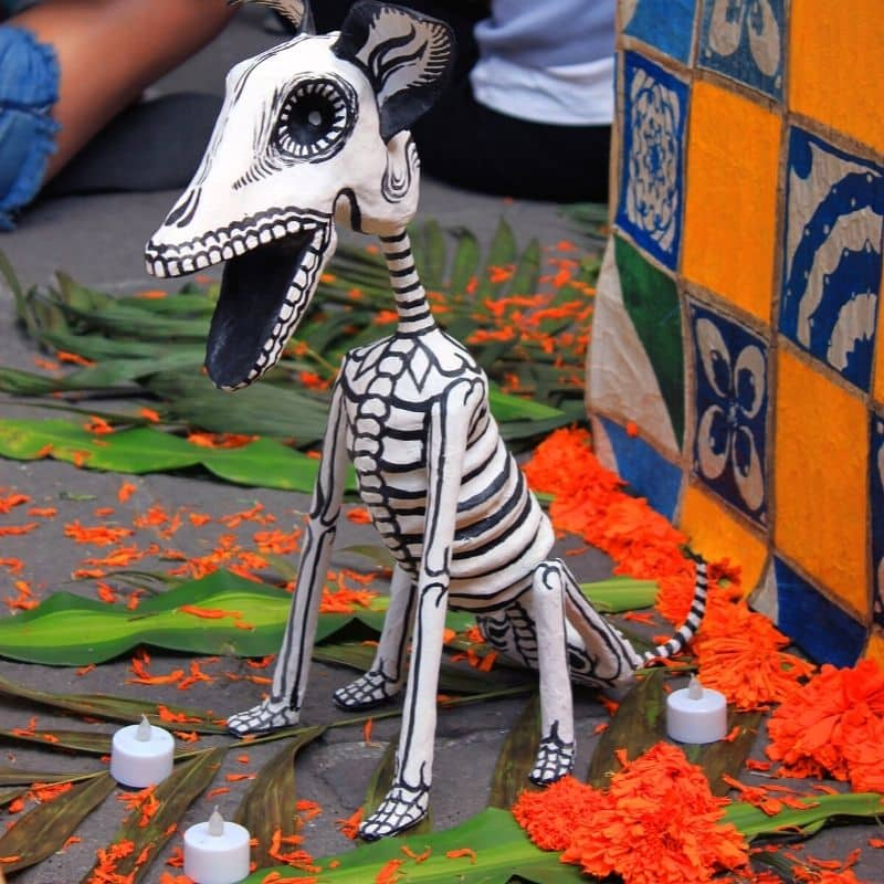 skeleton of a dog | oaxaca day of the dead in mexico