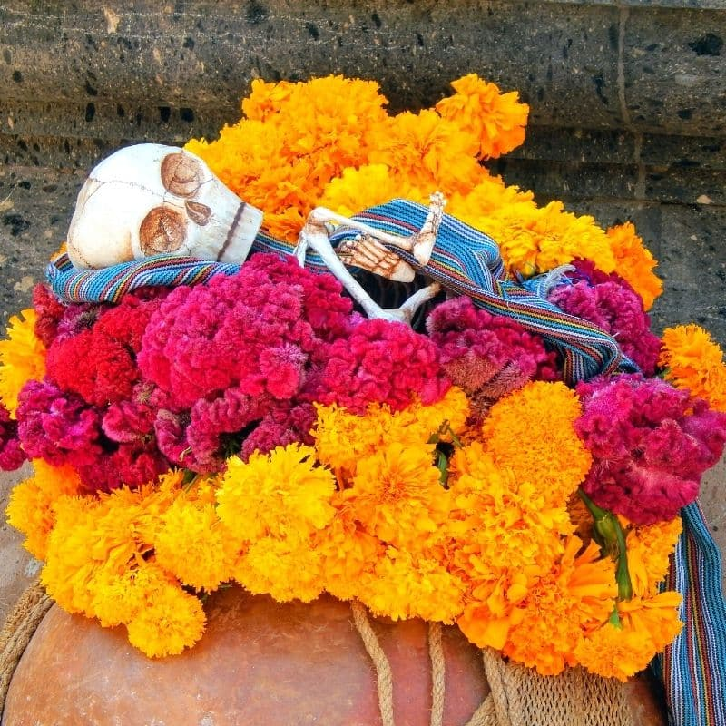 skeleton of a baby surrounded by orange and magenta colored marigold flowers | oaxaca day of the dead in mexico
