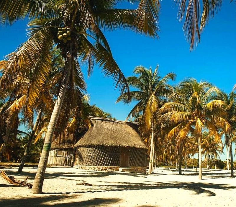 palm trees and huts on a beach in San Crisanto, near Merida, Mexico, Yucatan Peninsula