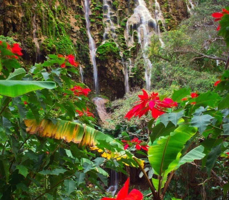 waterfall behind red, tropical flowers - Visit Las Grutas Tolantongo