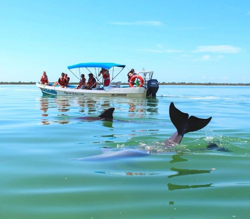 sian kaan tulum tour sees dolphins in the water | unique places to visit in Mexico