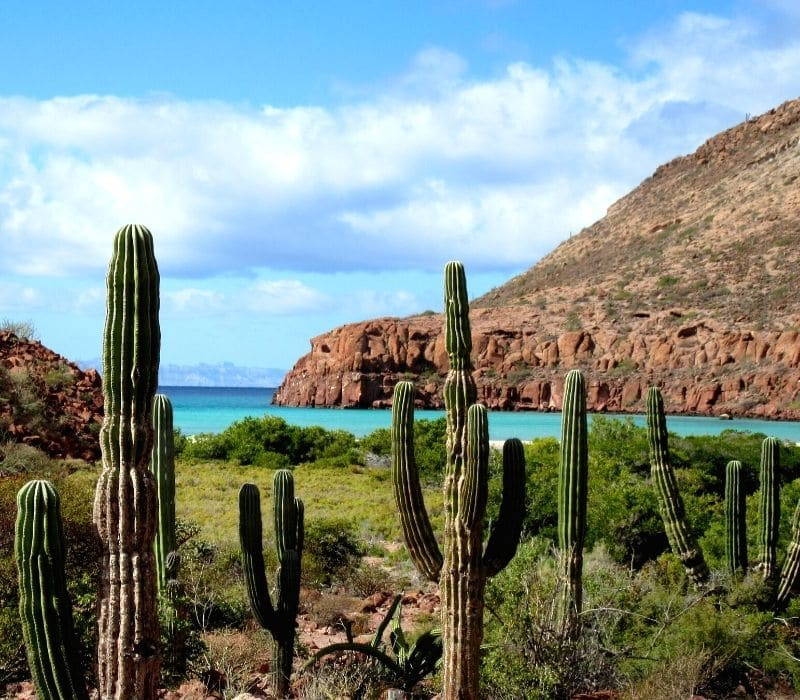 large cacti, and mountains and the bright blue Sea of Cortez, located in Baja California Sur, Mexico, a great place for a solo Mexico travel road trip