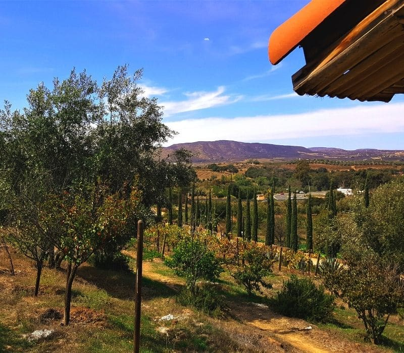 a vineyard landscape in Valle de Guadalupe wine country, located in Baja California Norte, Mexico