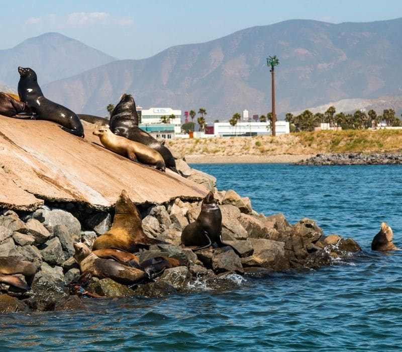 seals on some rocks just outside of the water in Ensenada, one of the Best Mexican Beach Towns