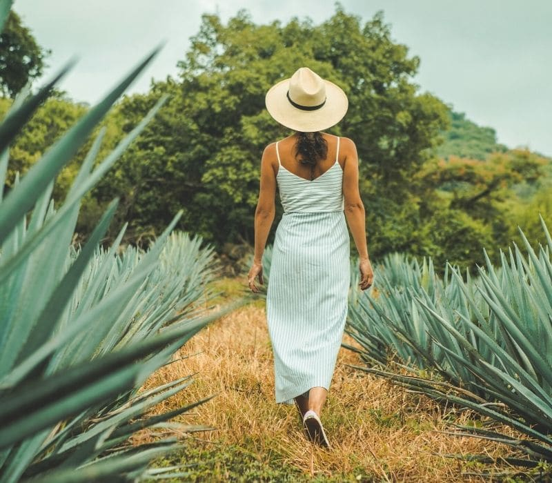 woman in green and white striped sundress wearing a tan sun hat walking through a field of large spiked green agave plants in a field in Tequila, one of the most unique places to visit in mexico